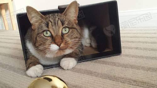如果去除猫咪小便后留下的尿味?